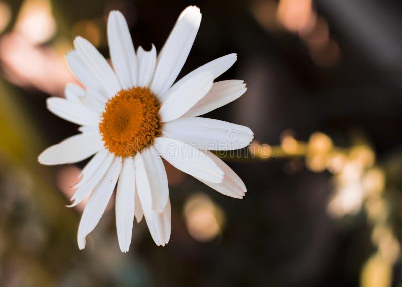 Magie lunatique de fleur de ressort photos stock