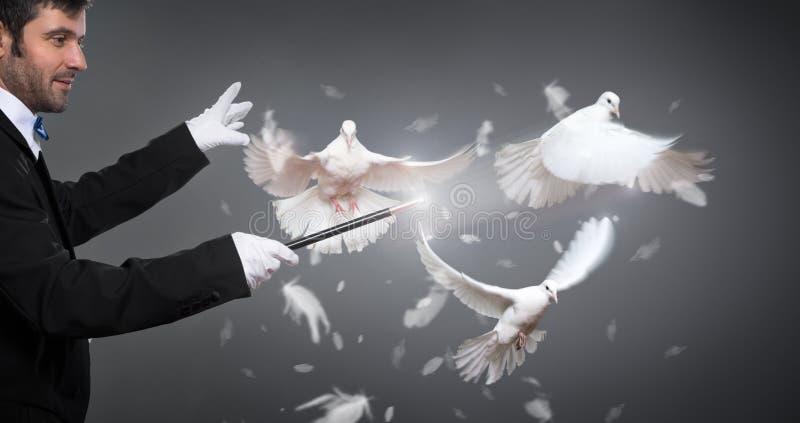 Magik wykonuje sztuczkę z gołębiem fotografia royalty free