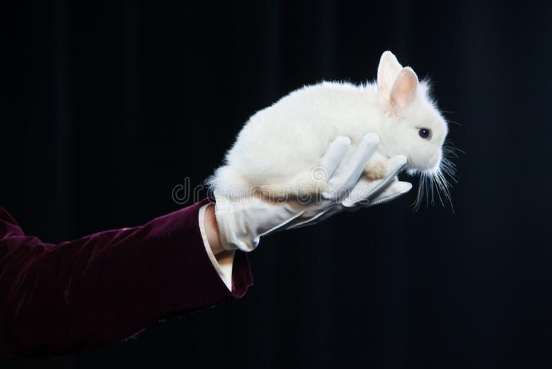Magik z królikiem, Juggler mężczyzna, Śmieszna osoba, Czarna magia, złudzenie na czarnym tle zdjęcia royalty free