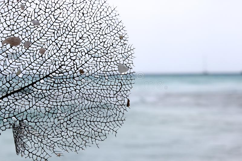 Magin av havsliv royaltyfria bilder