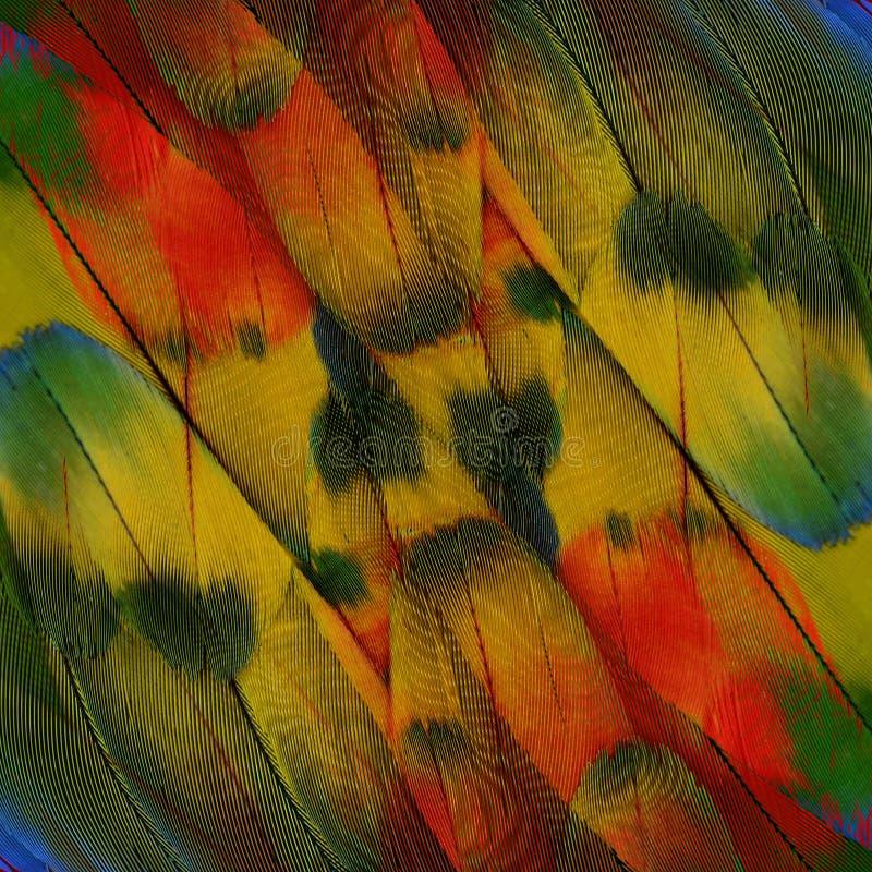 Maginificent av röd guling- och gräsplanbakgrund av den scharlakansröda aran arkivfoto