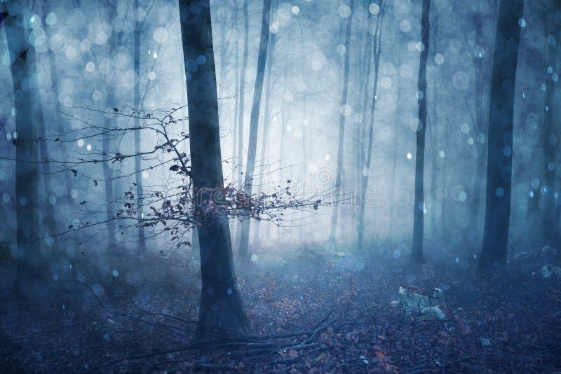 Magisch blauw gekleurd mistig bos fairytale stock afbeeldingen