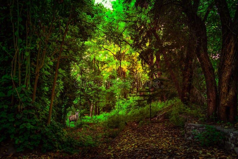 Magisch bos met een hert stock afbeeldingen