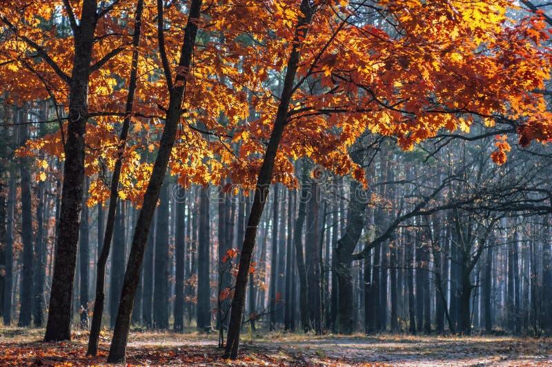 Magisch de herfstbos stock afbeelding