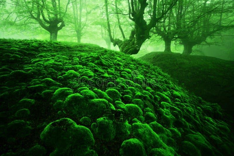 Magisch diep bos met mosbellen stock foto