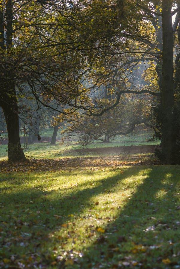 Magisch landschap, de zon tussen de bomen in het park in autu royalty-vrije stock foto's