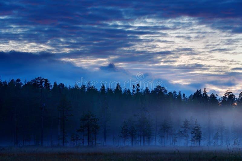 Magisch mistig landschap, bos met mist na zonsondergang Dalingslandschap met pijnboom Het wildaard in Finland Blauwe Hemel met Wo stock fotografie