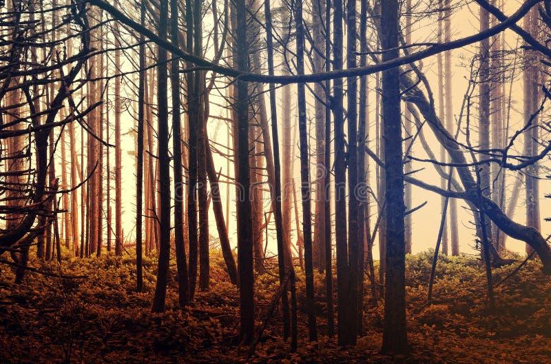 Magisch nevelig regenwoud bij zonsopgang stock afbeelding