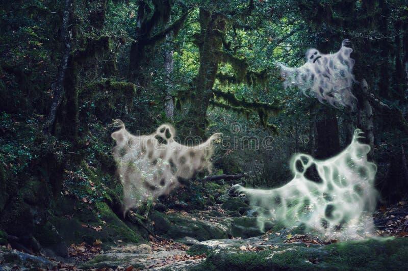 Magisch schemerig licht achtervolgd bos met drie enge spoken royalty-vrije stock afbeeldingen