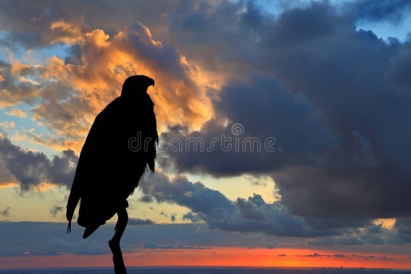 Magisch silhouet van de Afrikaanse Vissen - Eagle stock afbeelding