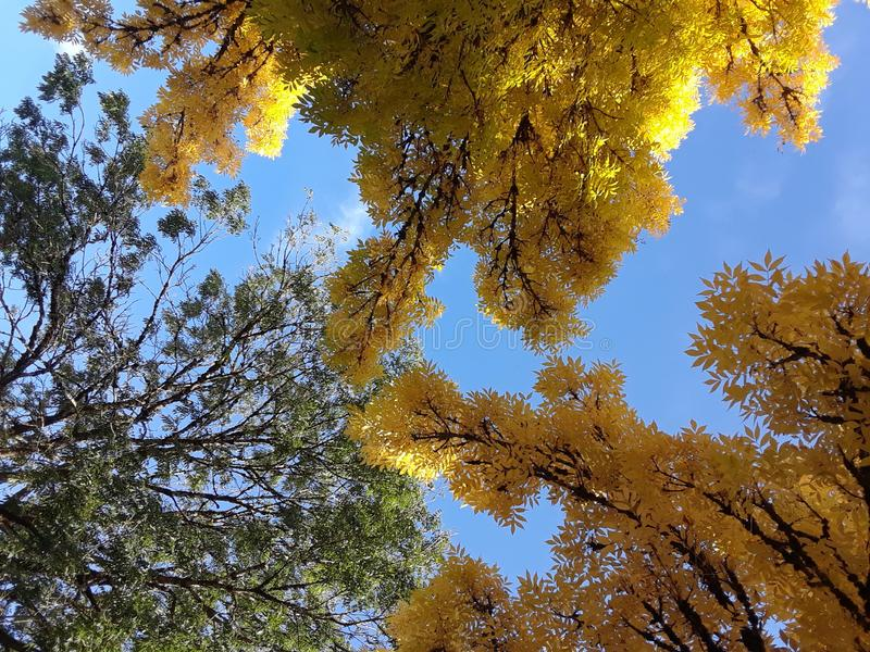 Magisch van de Herfst in Vancouver, BC Canada royalty-vrije stock afbeelding