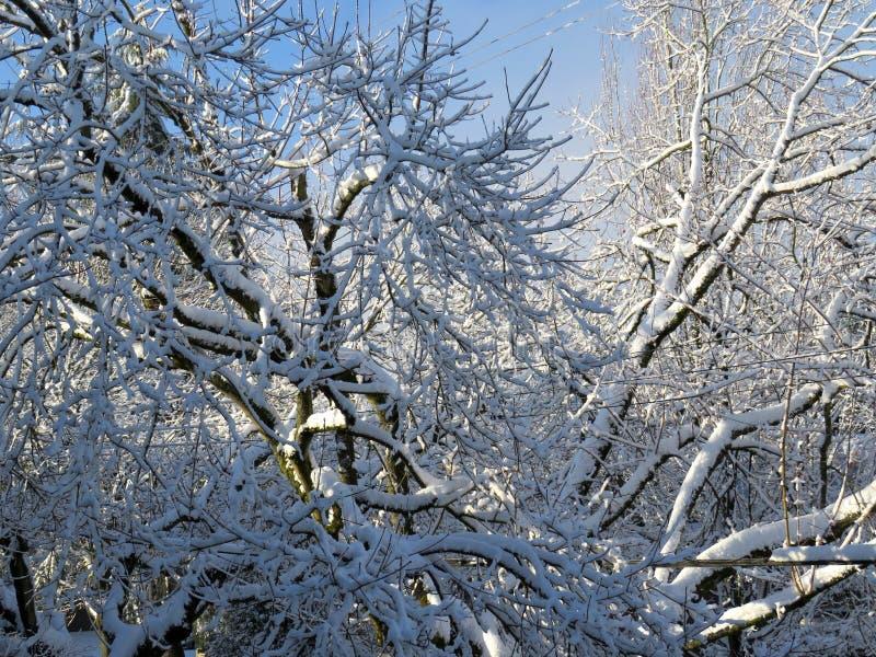 Magisch van de winter en de zon na de sneeuw royalty-vrije stock fotografie
