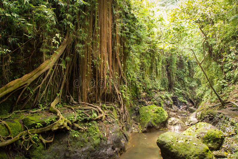 Magisch van tropisch bos royalty-vrije stock afbeelding