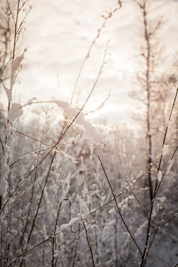 Magische bevroren weide royalty-vrije stock fotografie