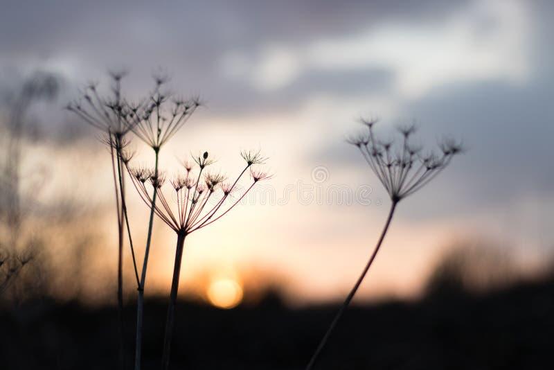 Magische bloem royalty-vrije stock afbeelding