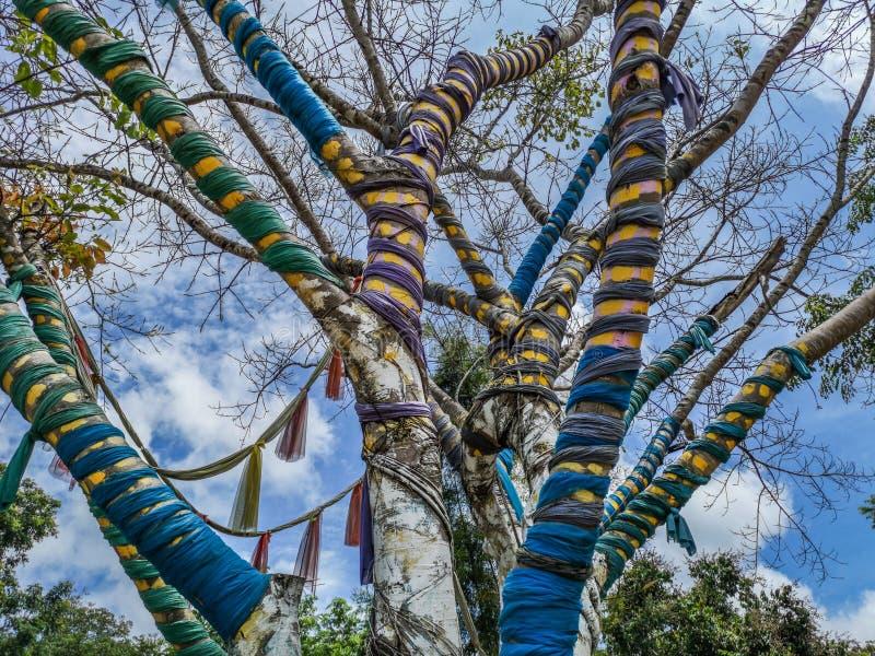 Magische boom de waarvan takken door kleurrijke stoffen in Nan Riverside Art Gallery-park worden omringd stock afbeeldingen