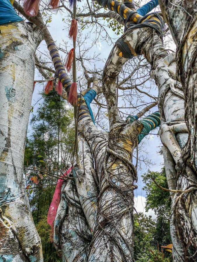 Magische boom de waarvan takken door kleurrijke stoffen in Nan Riverside Art Gallery-park worden omringd royalty-vrije stock foto