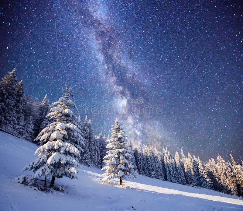 Magische boom in sterrige de winternacht stock fotografie