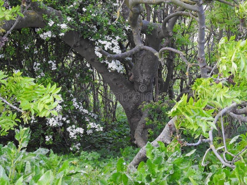 Magische boskreupelbosjegeheim verrukte tuin royalty-vrije stock afbeelding