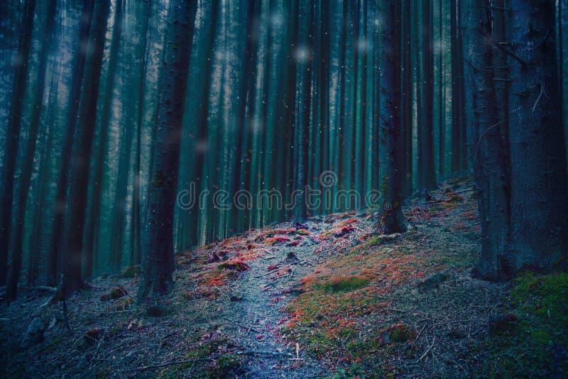 Magische bosweg in het hout met blauwe bomen en rood mos royalty-vrije stock foto