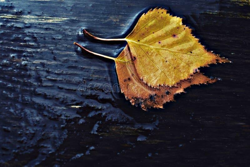 Magische de herfstbladeren op een regenachtige dag stock foto's