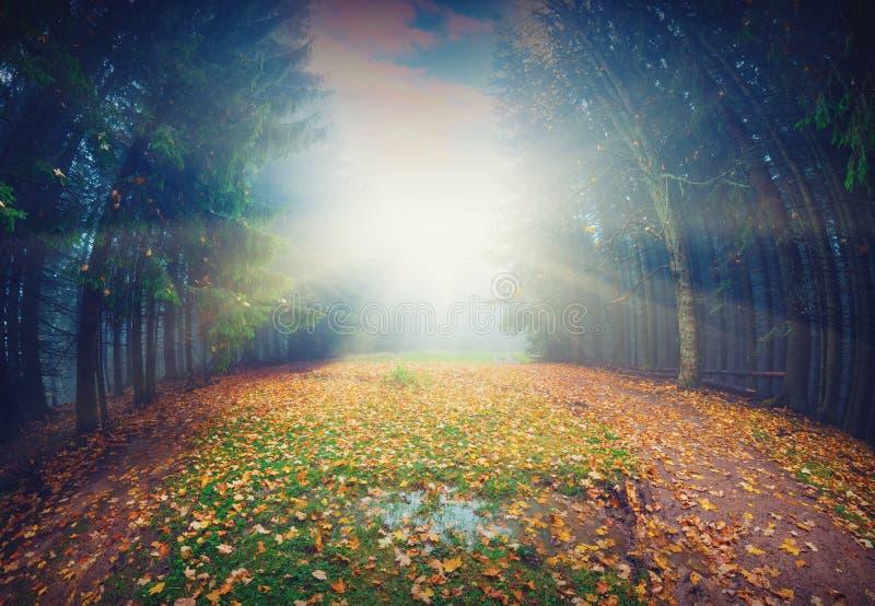 Magische de herfstforest_vintage royalty-vrije stock afbeeldingen
