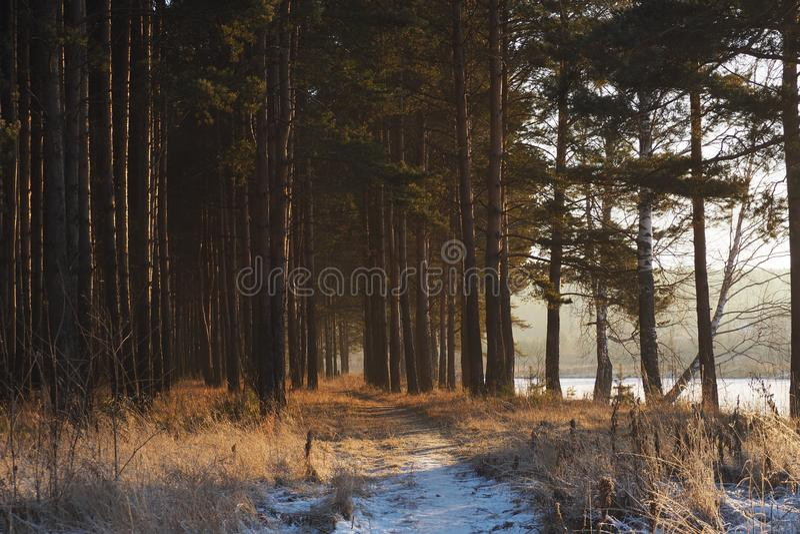 Magische Farben des Abendwinterwaldes stockfotos