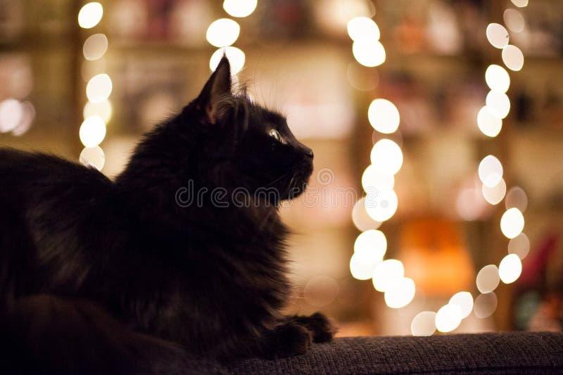 Magische kattenogen royalty-vrije stock foto