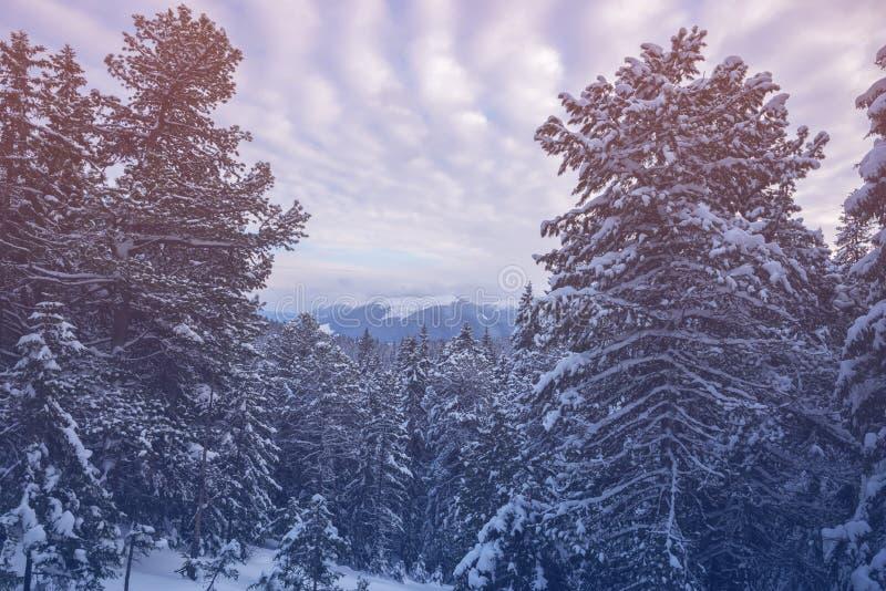 Magische Landschaft in den Winterbergen nach Schneesturm stockbild
