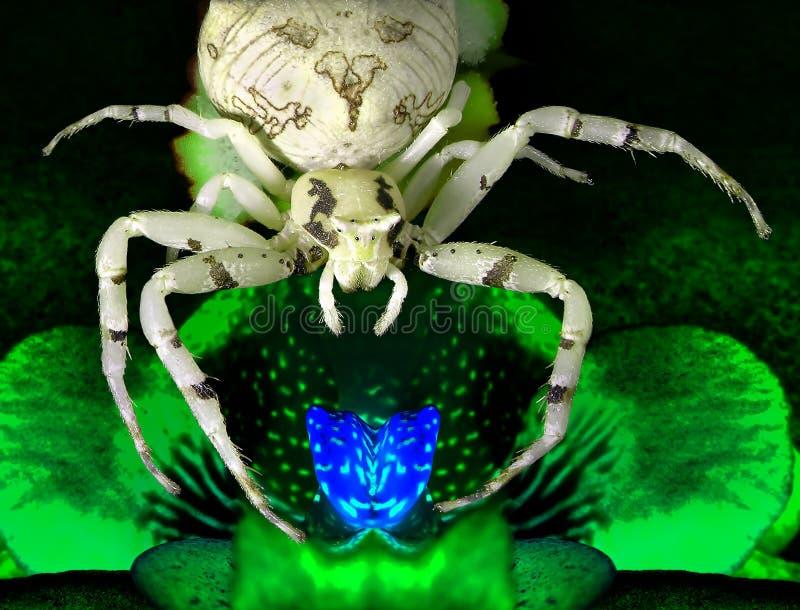 Magische lichtgevende bloeiende orchideebloem en de spin die hem bewaakt royalty-vrije stock foto's