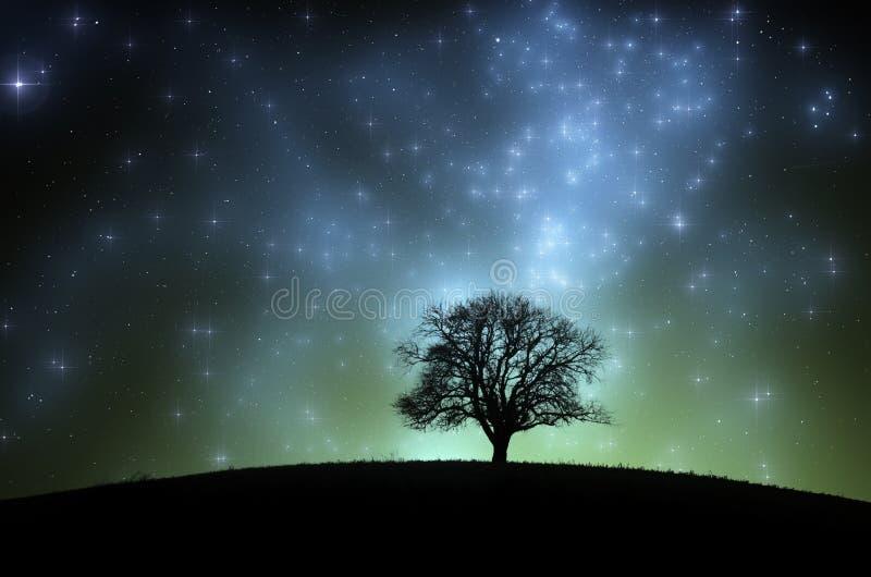 Magische nachthemel over weide met boom stock foto's