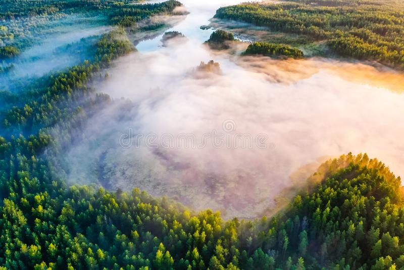 Magische ochtend in groen bos, luchtlandschap Mist over bomen stock afbeelding