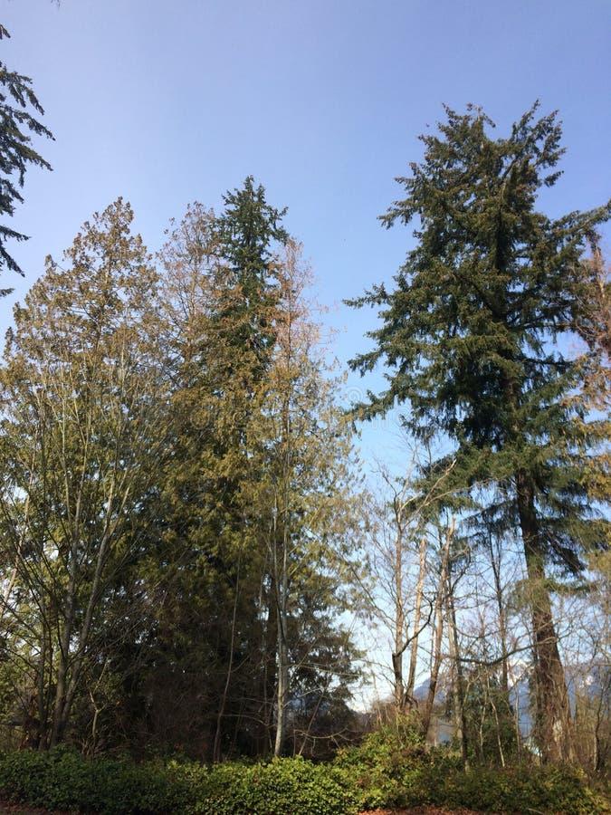 Magische ochtend in Stanley Park, Vancouver royalty-vrije stock foto's