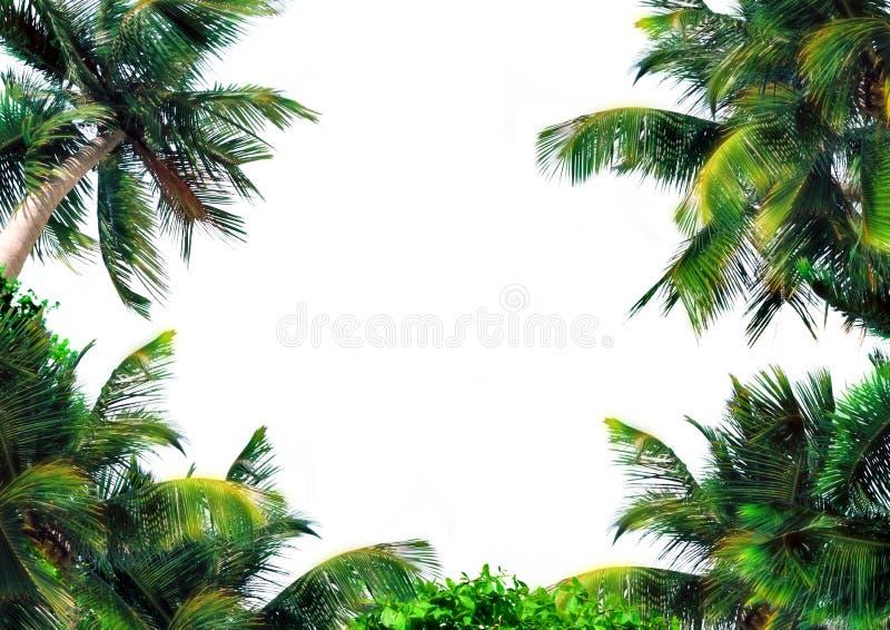Magische palmlaag royalty-vrije stock foto's