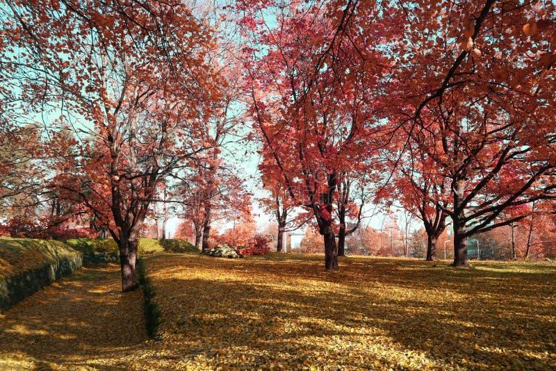 Magische Park verrukte plaats in de lente in de zon stock afbeelding