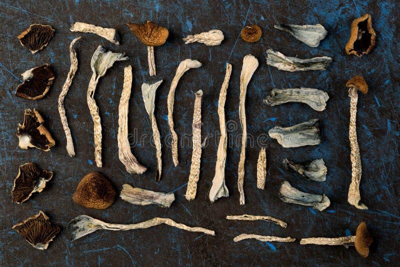 Magische Pilze, Draufsicht stockbild