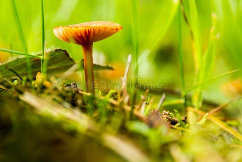 Magische Pilze in einem Sommerwald lizenzfreie stockfotografie