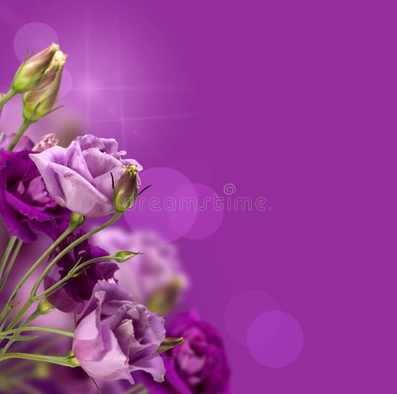 Magische purpere bloemen royalty-vrije stock afbeelding