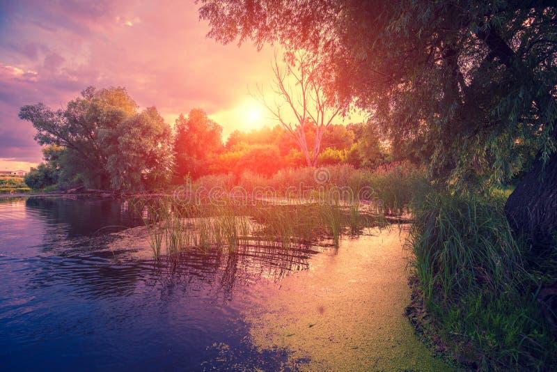 Magische purpere zonsondergang over het meer stock afbeeldingen