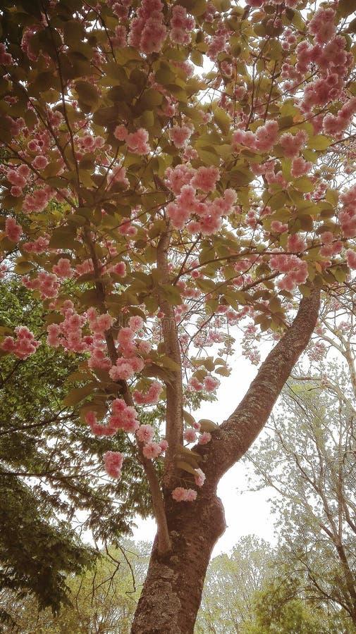 Magische roze boom royalty-vrije stock afbeeldingen