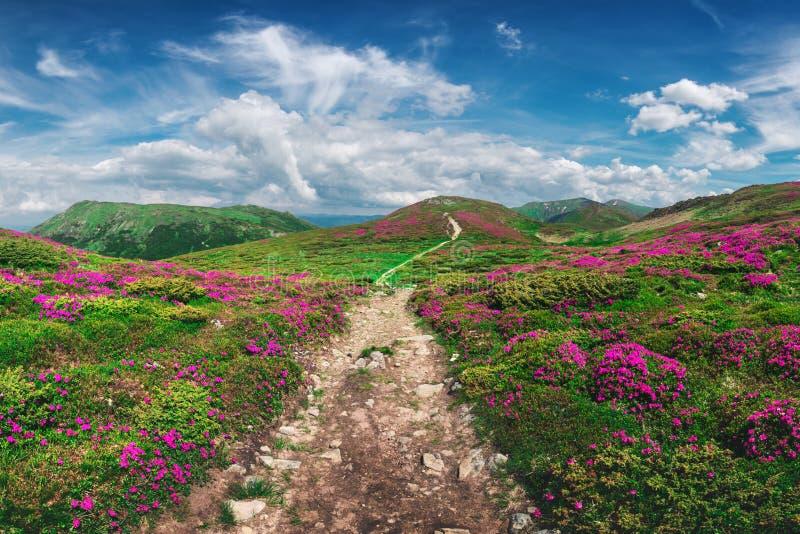 Magische roze rododendron royalty-vrije stock fotografie