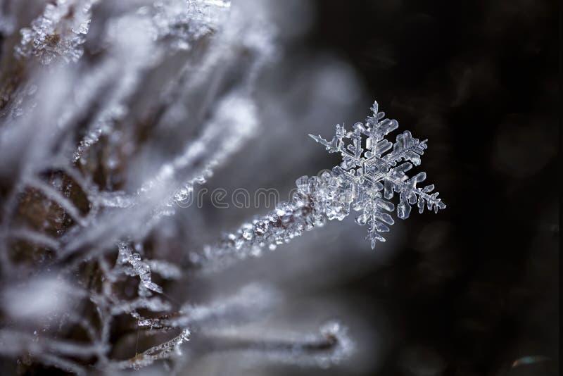 Magische Schneeflocke eingefroren festgehalten an gefrorener Klette lizenzfreie stockbilder