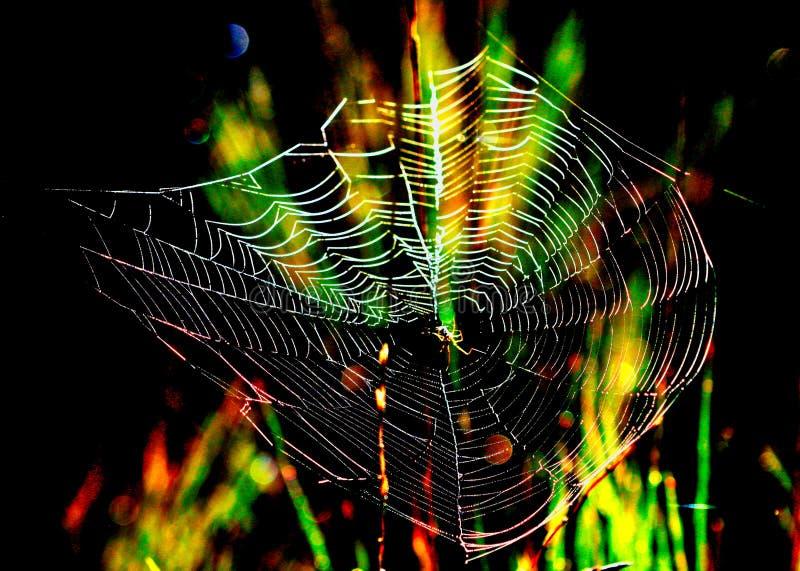 Magische Spinnewebachtergrond stock foto's