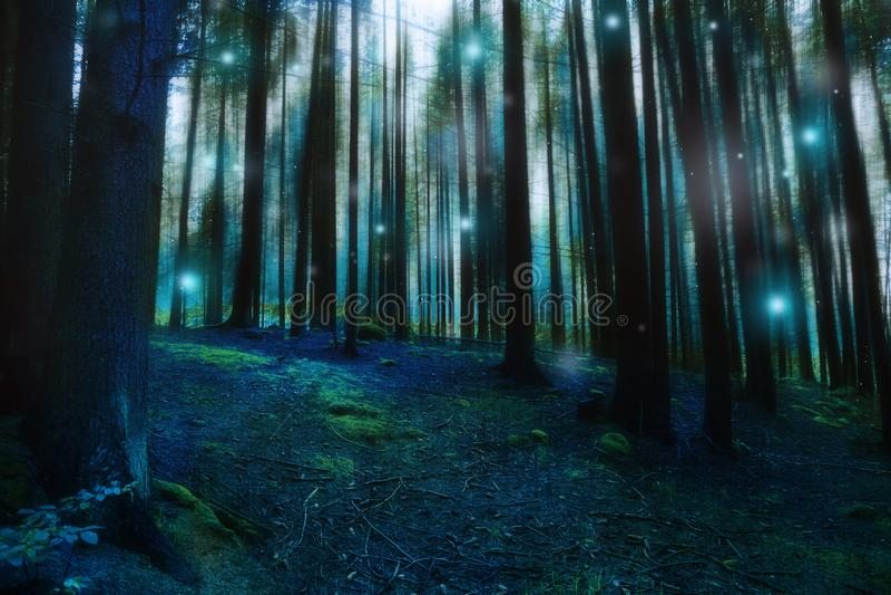 Magische surreale Waldlandschaft, dunkler düsterer Märchenwald mit Leuchtkäfern und Lichter, mysteriöser schwermütiger Wald lizenzfreie stockbilder