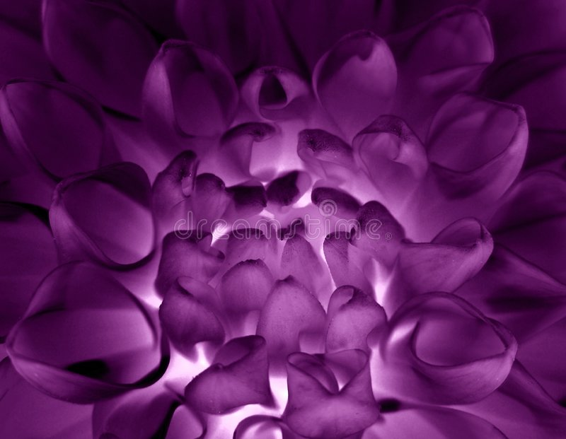 Magische violette bloem stock foto's