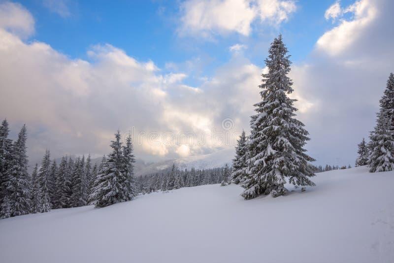 Magische Winterlandschaft - gezierte Bäume bedeckt mit Schnee stockbilder