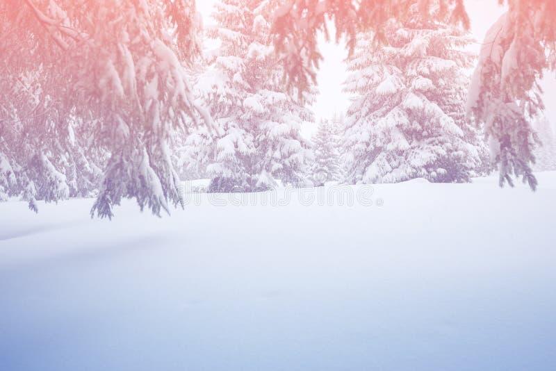 Magische Winterlandschaft - Schnee bedeckte Koniferenwald stockfotos