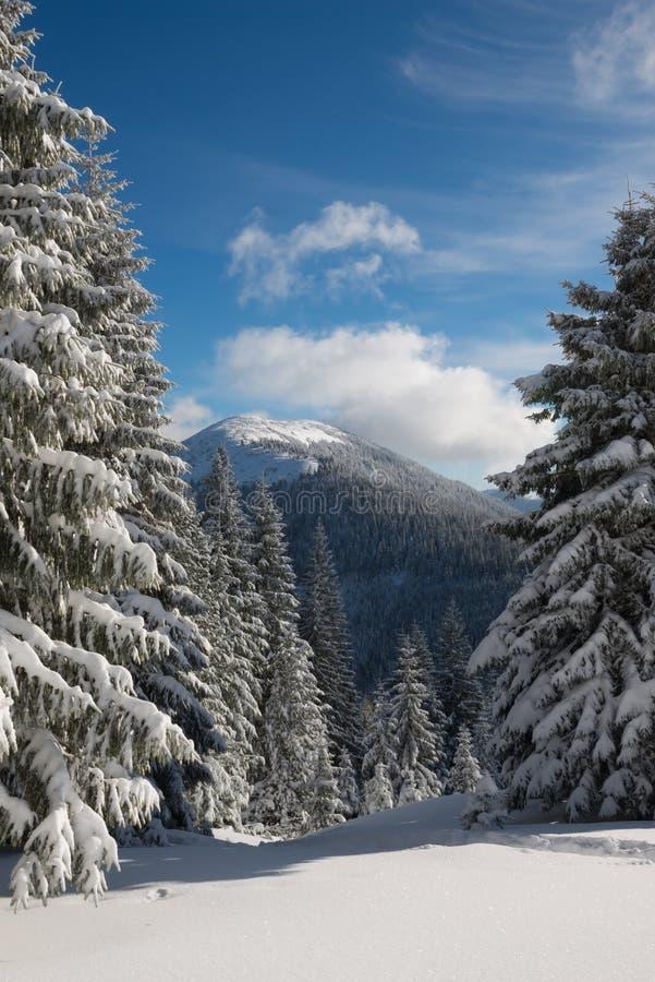 Magische Winterlandschaft - sonniger Tag in den Bergen stockbilder