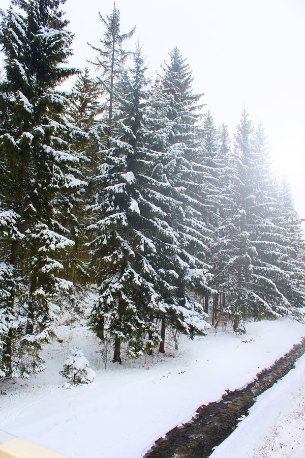 Magische Wintermärchenlandszene als Gebirgsstrom läuft durch schneebedeckten Kiefernwald in Zakopane lizenzfreie stockfotos