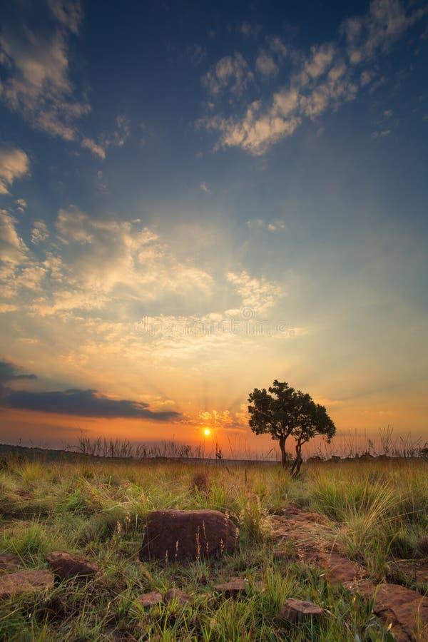 Magische zonsondergang in Afrika met een eenzame boom op een heuvel en louds stock foto